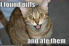 cat pills