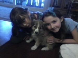 Pup Love 1