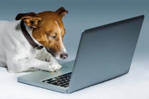 dog-writer